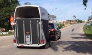 Lexus 8 tỷ kéo xe chở ngựa quý của dân chơi Quảng Ninh