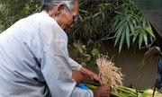 Lão nông hơn 40 năm vớt cá trên sông bằng bông lúa