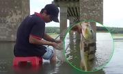 Cao thủ giật cá hoàng đế liên tục trên sông Đồng Nai