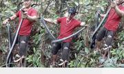 Bắt rắn hổ trâu hơn 4kg trong rừng ở Nam Định