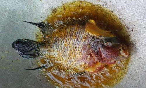 Con cá cảnh trở thành món ăn trên chảo dầu. Ảnh: Facebook.
