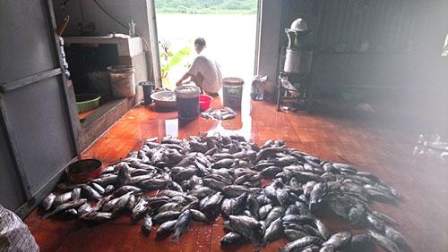 24 lồng cá lồng cá của  HTX Nông -Lâm - Thủy sản huyện Kỳ Sơn bị chết, thiệt hại hơn 20 tấn cá. Ảnh M.H