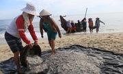 Ngư dân Huế lãi 20 triệu đồng một buổi sáng nhờ cá cơm
