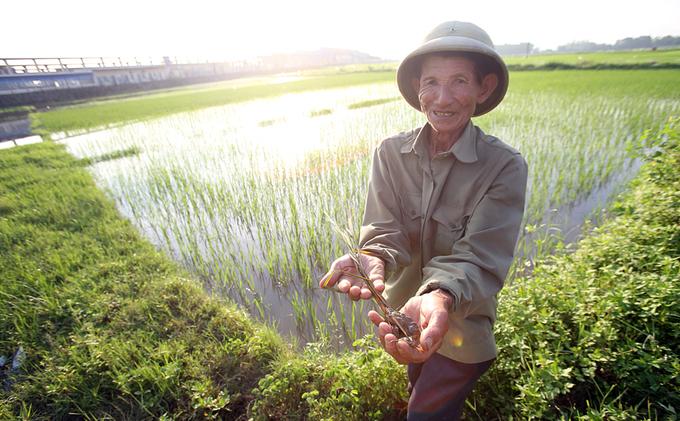 Một tuần sau mưa bão, nhiều đồng ruộng ở Hà Nội vẫn ngập sâu