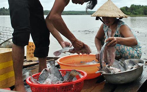 Cá chết được người dân vớt làm sạch mang bán - ảnh: Văn Trăm