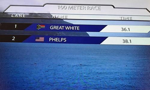 Phelps kém cá mập trắng 2 giây trên đường đua 100 mét. Ảnh chụp màn hình: Twitter.
