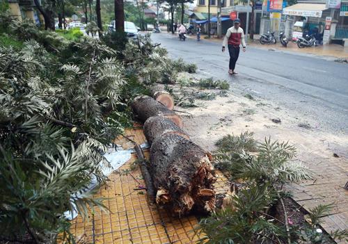 Cây xanh trên đường Trần Lê bị gãy đổ. Ảnh: Khánh Hương.