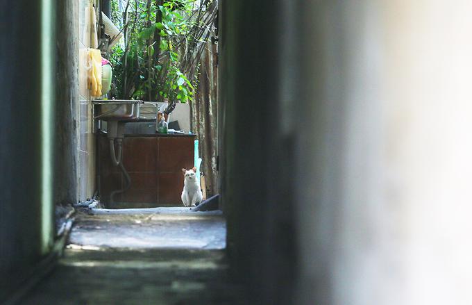 Những ngõ nhỏ chỉ một người đi lọt trong phố cổ Hà Nội