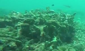 Viện Hải dương công bố kết quả khảo sát đáy biển khu nhận chìm bùn thải Vĩnh Tân