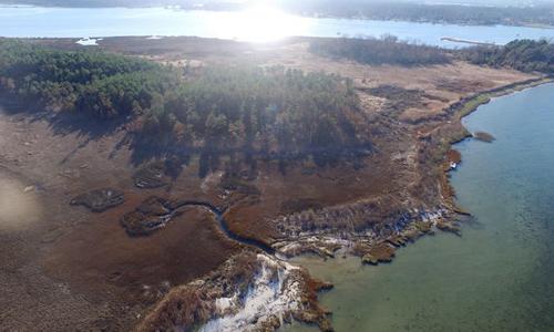 Thủy triều tháng 10/2015 giết chết nhiều cây thông gần Yorktown, Virginia. Ảnh: AP.