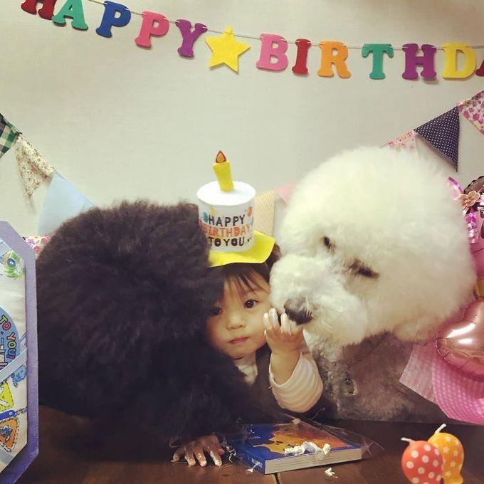 Tình bạn đẹp giữa cô bé Nhật và chú chó poodle
