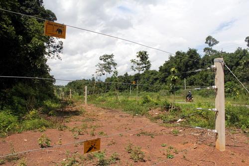 Hàng rào điện bảo phủ quanh bìa rừng tại xã Mã Đà. Ảnh: Phước Tuấn