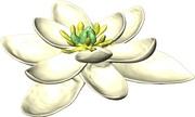 Tổ tiên của các loài hoa cách đây 140 triệu năm