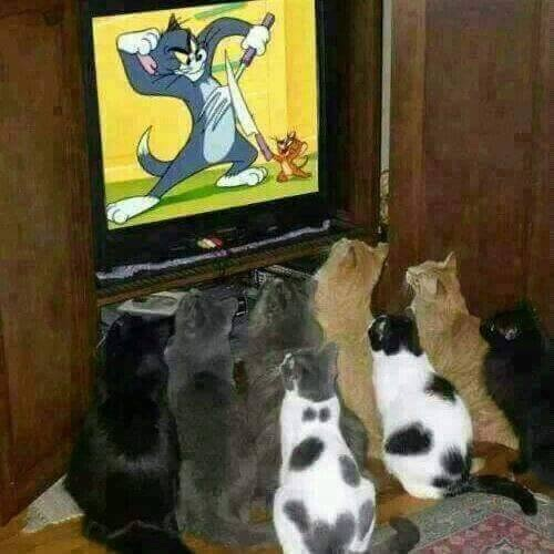Phim hành động của loài mèo.