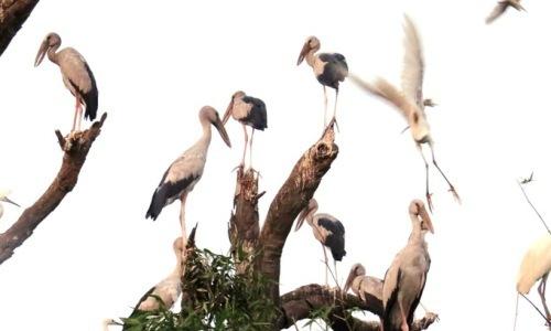 Hơn 45 tỷ đồng bảo tồn đảo cò ở Hải Dương