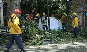 Cây đổ giữa lễ hội tôn giáo ở Bồ Đào Nha, 12 người chết