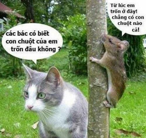 Khi mèo chuột rủ nhau chơi trốn tìm.