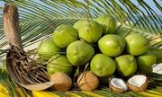 Cách phân biệt dừa xiêm và dừa thường?