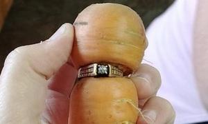 Cụ bà tìm thấy nhẫn thất lạc 13 năm thít quanh củ cà rốt