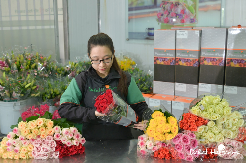 Một góc khu vực đóng gói hoa hồng cao cấp Dalat Hasfarm. Trao đi sự tử tế là cách giúp cho cuộc sống này tốt đẹp hơn, như hình ảnh những cành hồng xanh tốt sẽ nở bừng rực rỡ trong không gian sống của mọi người. Bởi thế, Dalat Hasfarm đã, đang và sẽ cố gắng từng ngày để mang đến cho khách hàng những cành hồng không chỉ bền, đẹp mà còn an toàn; để khi ôm hoa vào lòng, bạn sẽ cảm nhận được tất cả những gì tốt đẹp nhất mà công ty đã trao gửi.