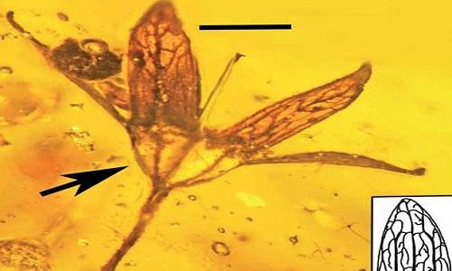 Bông hoa 100 triệu năm nguyên vẹn như mới hái trong hổ phách