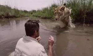 Khoảnh khắc sư tử ôm chầm ân nhân khiến người xem đứng tim