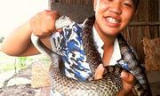 Tay không bắt sống rắn hổ vện hơn 3 mét ở Sài Gòn