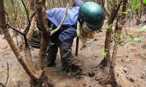 Lội rừng sình lầy mò sam đất kiếm nửa triệu mỗi ngày