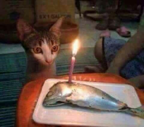 Bánh sinh nhật cho mèo.