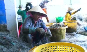 Nghề gỡ lưới ghẹ ở cửa biển Cà Mau