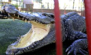 Vườn thú chật chội chờ giải thể ở Đà Nẵng