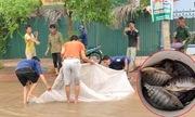 Dân đổ xô ra đường bắt cá bằng màn, rổ, vợt