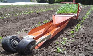 Máy trồng rau gieo cả luống trong vài phút