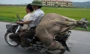 1.001 kiểu vận chuyển chỉ có ở Việt Nam
