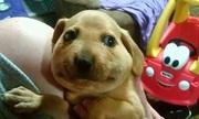 1.001 biểu cảm hài hước của cún cưng khi bị ong đốt