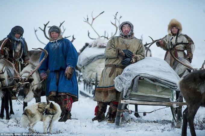 Bộ tộc Siberia uống máu tuần lộc để tồn tại trong giá lạnh