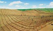 Hỗn hợp giúp Trung Quốc biến sa mạc thành đất trồng