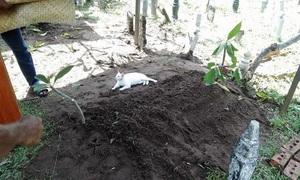 Mèo không chịu rời mộ người đàn ông ở Malaysia