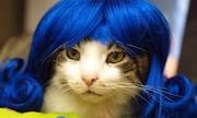 Khi mèo cưng hóa thân thành quý cô sang chảnh