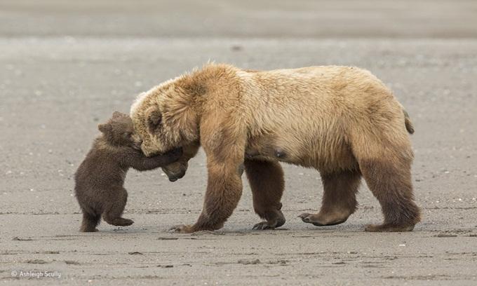 Những bức ảnh động vật hoang dã đẹp nhất năm 2017