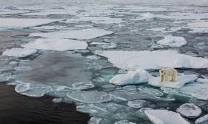 Đại tuyệt chủng trên toàn cầu sẽ diễn ra năm 2100