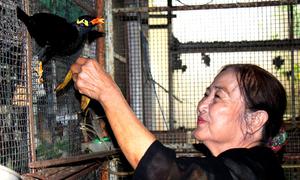 Cụ bà 74 tuổi dạy đàn chim nhồng biết đọc thơ