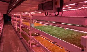 Nông trại rau nằm sâu 33 m dưới lòng London