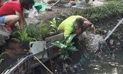 Chàng Tây vớt rác trồng cây xanh quanh mương thối ở Hà Nội