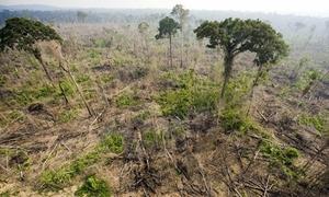 Bị tàn phá, rừng nhiệt đới bắt đầu thải carbon nhiều hơn hấp thụ