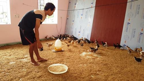 Nhà cao cửa rộng hoán đổi thành chuồng nuôi gà, lợn ở Hưng Yên