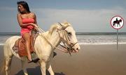 Cô gái cưỡi ngựa vào đường cấm cho ta đoán được chữ gì?