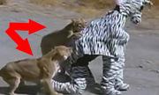 Hai thanh niên kinh hãi vì giả ngựa vằn thám hiểm Châu Phi