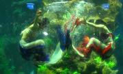 Những cô gái hoá thân 'nàng tiên cá' lặn dưới thủy cung