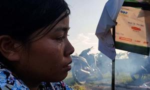 Người phụ nữ khóc nức nở bên đàn lợn chạy lũ ở triền đê
